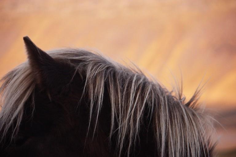 lófül